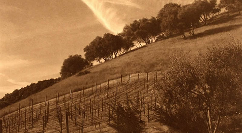 vineyard with clouds